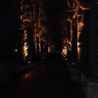 Weg der mysterischen leuchtenden Bäume